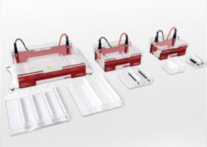 Electrophoresis and Blotting
